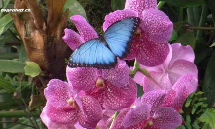 Vydejte se do skleníku Fata Morgana za křehkou motýlí krásou