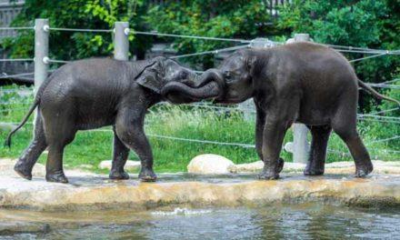 Den dětí v Zoo Praha se spoustou her, soutěží a slůňaty