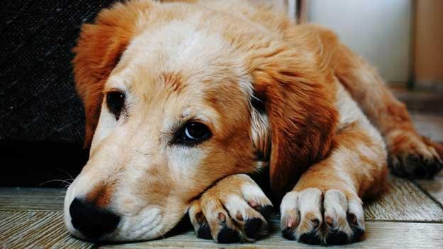 Nová aplikace na webu SVS usnadní vyhledávání ztracených psů