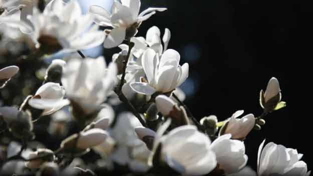 12. dubna opět otevře Botanická zahrada venkovní expozice